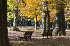 散歩やウォーキングにおすすめ。景色がキレイで歩きやすい東京都内の公園5選