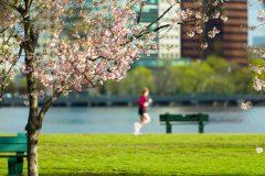 桜の絶景を走ろう。都内お花見ランニングスポット5選
