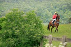 【エンデュランス馬術競技】まるで馬のウルトラマラソン!種類・ルール・注意点┃一度やってみたい!珍しい海外スポーツ #4