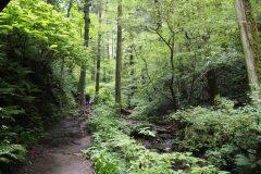 登山初心者でも深山を満喫できる。高尾山6号路の魅力