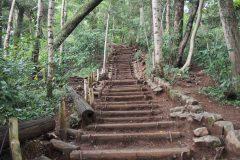 登山初心者でも深山を満喫できる。「高尾山6号路」の魅力を徹底紹介