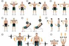 肩の筋肉を鍛える。「三角筋」前部・中部・後部を大きくするダンベル筋トレを解説