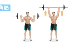 肩を大きく丸くするには?肩の筋肉「三角筋」を鍛える筋トレ&効果を高めるポイント