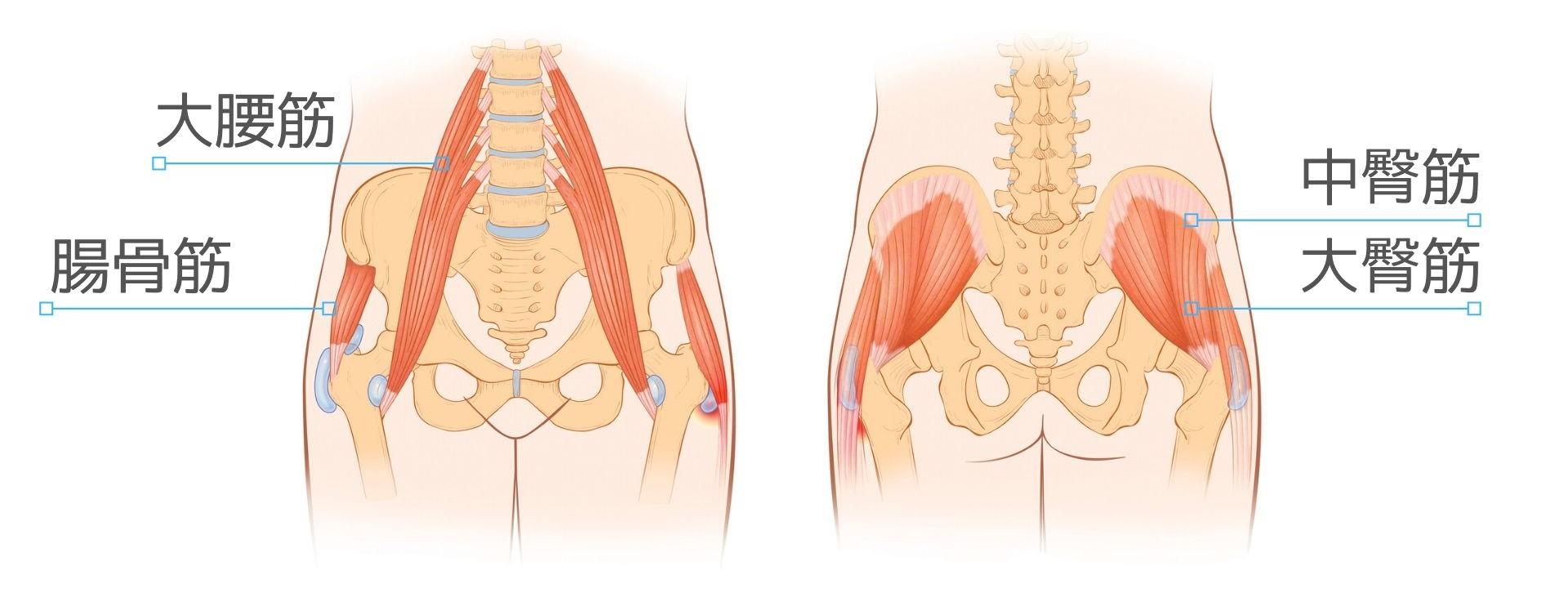 筋 股関節 トレ 痛