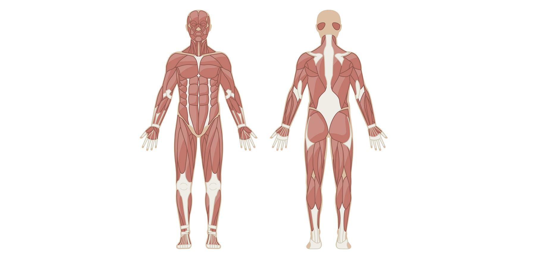 腹筋&体幹を鍛える人気筋トレ「プランク」、効果を上げる4つの ...