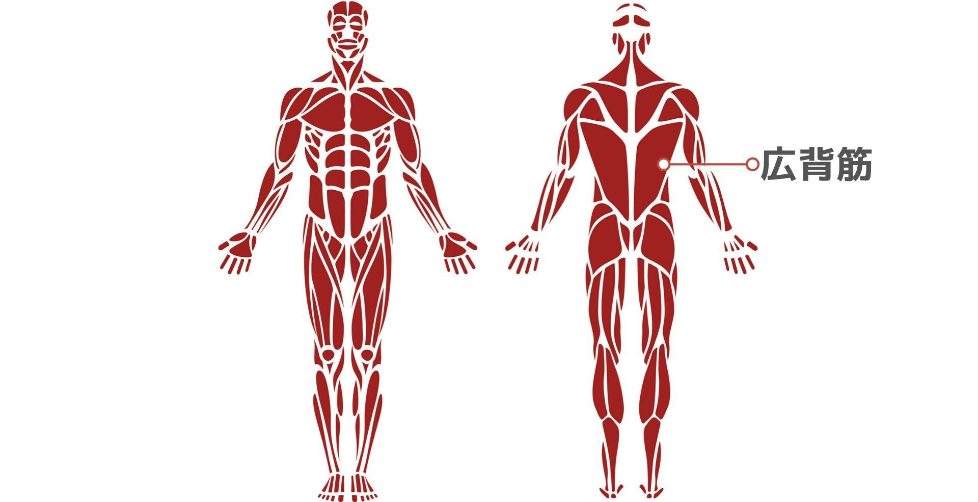 名前 背中 筋肉 【完全版】背中のトレーニングはこれをすればOK!背筋を鍛える筋トレ10選